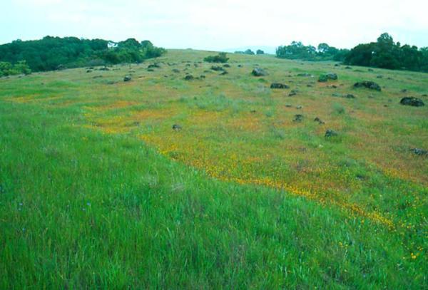 Яшмовый хребет - весна, цветы, серпентиниты.. или геологическое картирование по ботаническим индикаторам.