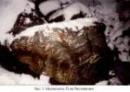 Отчёт по геолого-минералогической практике в районе г. Питкяранта (05 ноября - 11 ноября 2001 года)