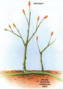 Палеонтологи уточнили время и место появления сосудистых растений