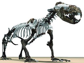 Найдено недостающее звено эволюции ластоногих
