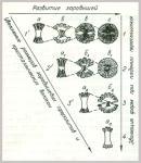 Эволюция и развитие сферокристаллов пренита: 1-2-3-4, - наблюдаемый ряд, по Н.3. Евзиковой. 1-1, 2-2, 3-3, - реконструкции